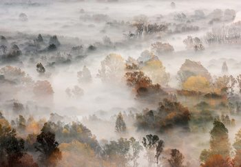 Autumn Colours In The Fog Fototapet