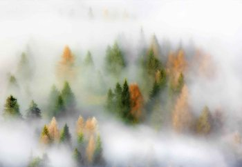 Autumn Dream Fototapet