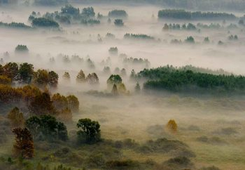 Autumn Dream Fototapet