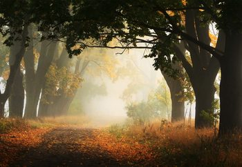Autumn In Poland Fototapet