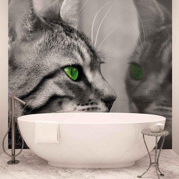 Cat Kitten Fototapet