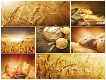 chlieb, klasy, žito, pole Fototapet