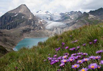 Color Between Mountains Fototapet