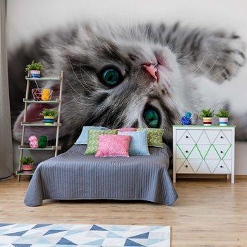 Cute Kitten Fototapet