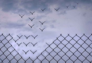 Don´T Fence Me In! Fototapet
