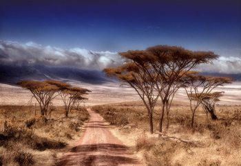 Dry Season Fototapet
