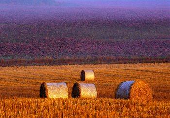 Farmer's Field Fototapet