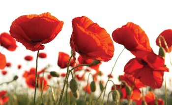Flowers Poppies Field Nature Fototapet