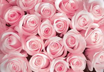 Flowers Roses Fototapet
