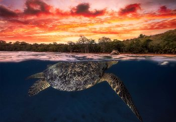 Green Turtle And Fire Sky Fototapet