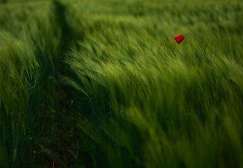 In The Wind Fototapet