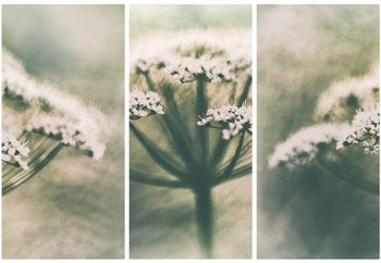 Memories Fototapet