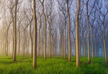 Morning Of The Forest Fototapet