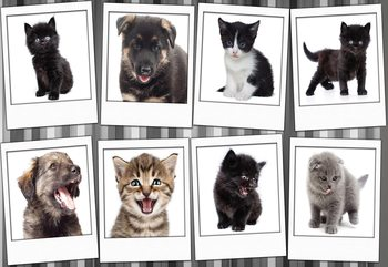 Puppies And Kittens Fototapet
