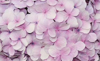 Purple Flowers Floral Design Fototapet