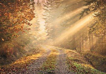 Skog - Golden Path Fototapet