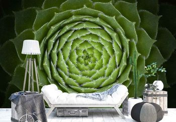 Succulent Fototapet