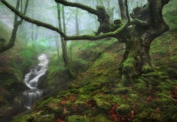 The Enchanted Forest Fototapet