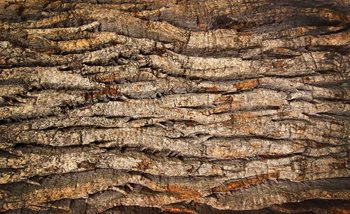 Tree Bark Fototapet