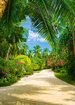 TROPICAL PATHWAY Fototapet
