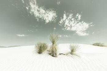 White Sands Vintage Fototapet