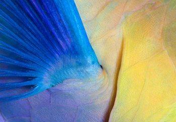 Wings Fototapet