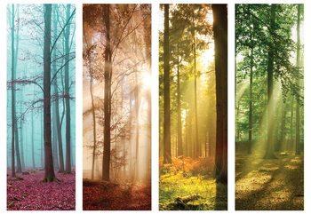 4 Seasons In The Forest Tapéta, Fotótapéta