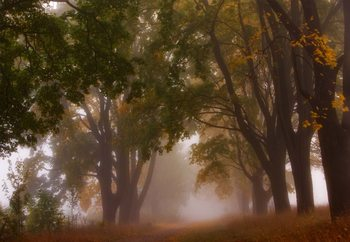 Autumn Mist Tapéta, Fotótapéta