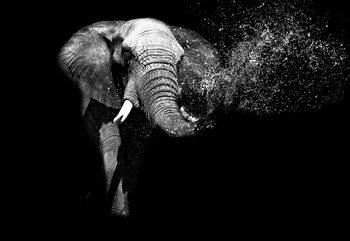 Black And White Elephant Tapéta, Fotótapéta
