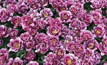 Blossomed Flowers Purple Fali tapéta