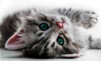 Cat Kitten Tapéta, Fotótapéta