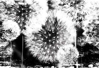 Dandelion Black White Tapéta, Fotótapéta