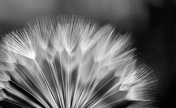 Flowers Dandelion Nature Tapéta, Fotótapéta