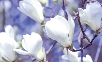 Flowers Magnolia Nature Tapéta, Fotótapéta