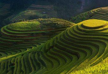 Gold Rice Terrace Tapéta, Fotótapéta
