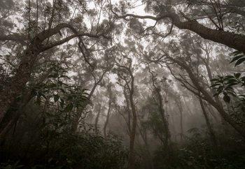Heart Of Darkness Tapéta, Fotótapéta