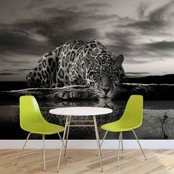 Leopard Feline Reflection Black Fali tapéta