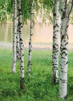NORDIC FOREST Fali tapéta