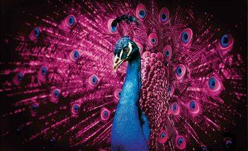 Peacock Bird Pink Feathers Tapéta, Fotótapéta