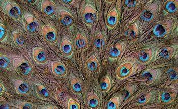 Peacock Feathers Tapéta, Fotótapéta