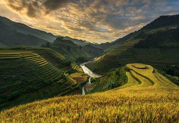 Rice Terrace In Vietnam Tapéta, Fotótapéta