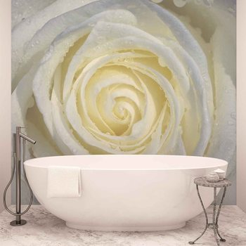 Rose Flower White Tapéta, Fotótapéta