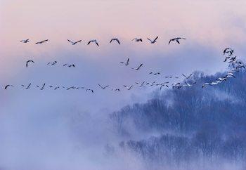 Snow Geese Tapéta, Fotótapéta