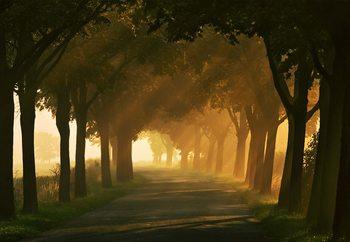 Sunbeams On The Road Tapéta, Fotótapéta