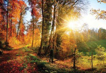 Sunrise In Autumn Forest Tapéta, Fotótapéta
