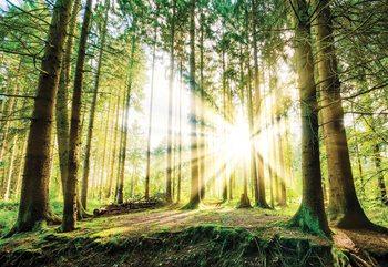 Sunrise Through The Forest Trees Tapéta, Fotótapéta