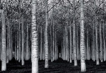 The Forest For The Trees Tapéta, Fotótapéta