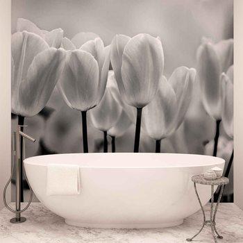 Tulip Flowers Tapéta, Fotótapéta