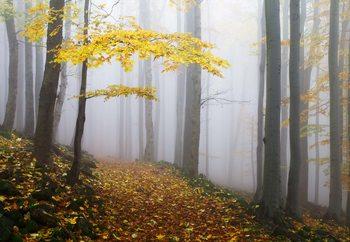 Yellow Leaves In The Forest Tapéta, Fotótapéta
