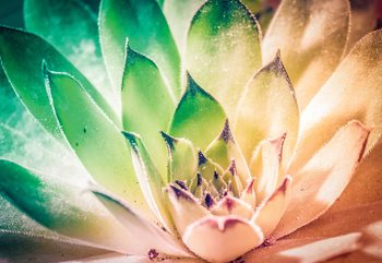 Aloe Plant Green And Orange Fototapeta